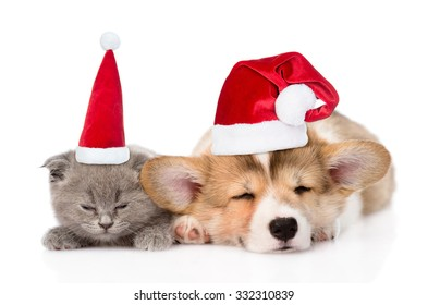 sleeping kitten and Pembroke Welsh Corgi puppy in christmas hats. isolated on white background
