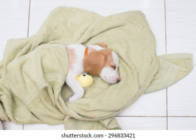 Sleeping little dog with blanket
