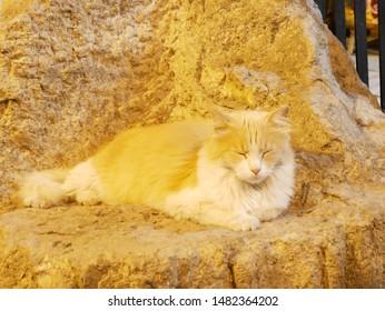 Sleeping Long haired cat(Stray cat)