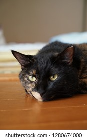 Sleeping on the floor, tortoiseshell cat