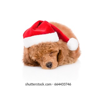 Sleeping poodle puppy in red christmas hat. isolated on white background