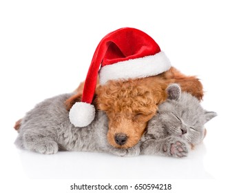 Sleeping poodle in red christmas hat hugs a kitten. isolated on white background