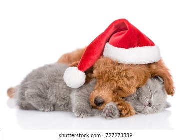 Sleeping poodle in red christmas hat embracing a kitten. isolated on white background