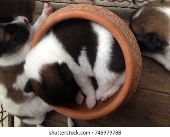 Sleeping puppy in the bowl