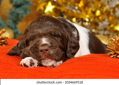 Sleeping puppy with christmas dekoration