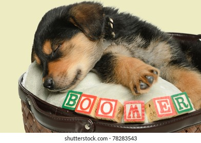 A sleeping puppy is having a nap in a basket, shot with his name spelled using alphabet blocks.