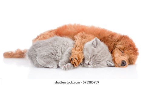 Sleeping puppy hugging a smiling kitten. isolated on white background