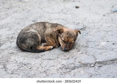 sleeping puppy on a street