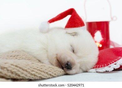 Sleeping puppy in red Santa Claus hat. Christmas, New year background