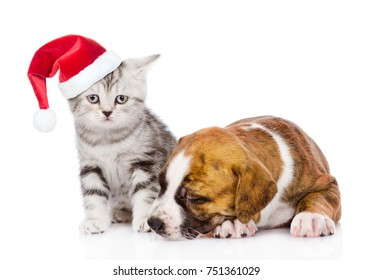 Sleeping puppy and tabby kitten in red christmas hat. isolated on white background