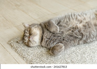 Sleeping red cat on carpet at indoor