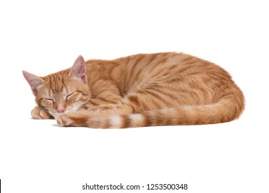 Sleeping red cat on white background.