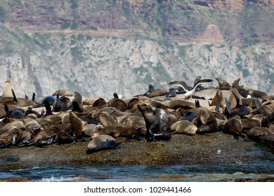 Sleeping and Relaxing Seals next to Birds and the Sear