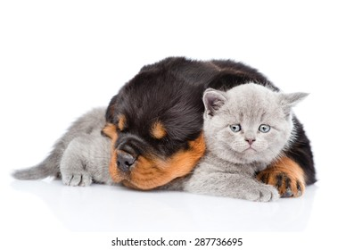 Sleeping rottweiler puppy embracing cute kitten. Isolated on white background