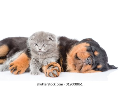 Sleeping rottweiler puppy embracing newborn kitten. Isolated on white background