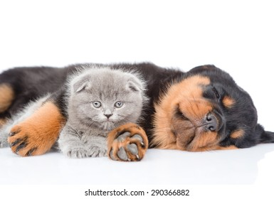 Sleeping rottweiler puppy hugging newborn kitten. Isolated on white background