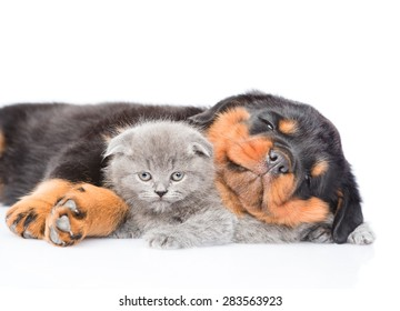 Sleeping rottweiler puppy hugging small kitten. Isolated on white background