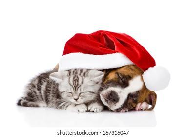 sleeping Scottish kitten and puppy with santa hat. isolated on white background