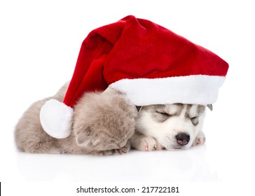 sleeping scottish kitten and Siberian Husky puppy with santa hat. isolated on white background