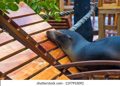 Sleeping sea lion in Galapagos Islands