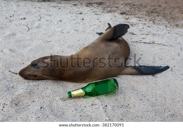 sleeping-sea-lion-with-beer-600w-382170091.jpg