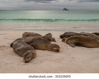 Sleeping sea lions on beach with green ocean, cloudy sky and Kicker Rock in the background.