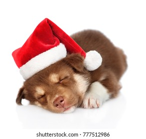 Sleeping Siberian Husky puppy in red santa hat. isolated on white background