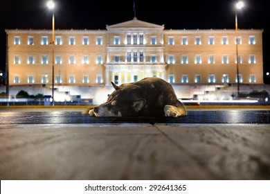 Sleeping street dog near Greek Parliament at night, Athens