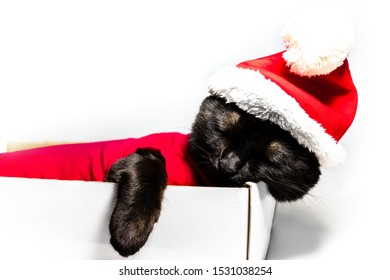 sleeping tired black cat in Santa Claus hat sitting on studio white background. resting for greeting card with copy space.