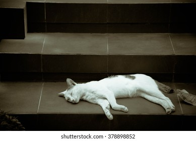 A Sleeping White Cat in Black And White.