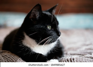 Sleepy black and white fluffy cat with green eyes rests on comfy bed throw