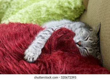 Sleepy cat in colorful natural background.Cat on  a sofa. Cat portrait