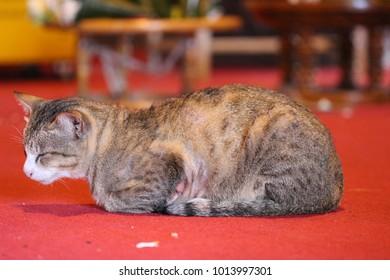Sleepy cat daytime