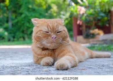 Sleepy cat in the garden.
