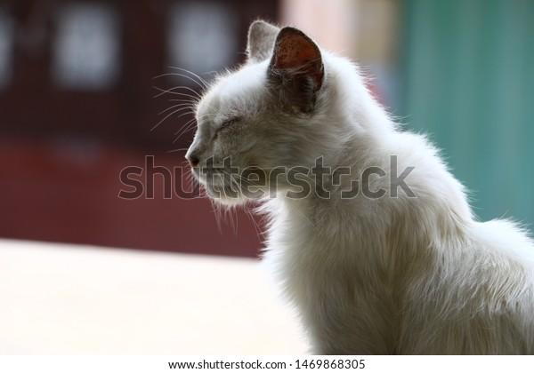 sleepy-cat-kitten-looking-very-600w-1469