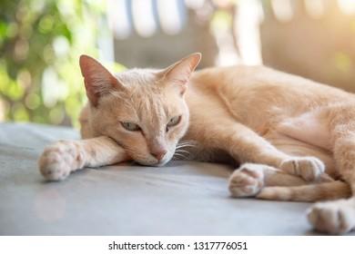sleepy cat in morning. cute kitty animal sleeping on outdoor iron table.