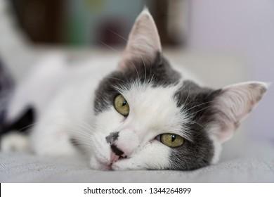Sleepy cat on sofa