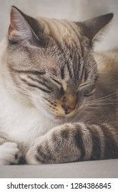 sleepy cat relaxing
