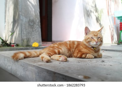 Sleepy cute brown cat lay down on the tropical house's pavement