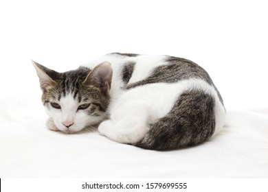 Sleepy cute kitten on white background