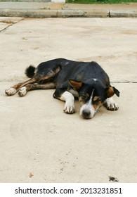 sleepy dog on the street