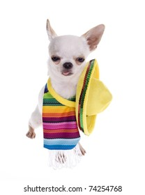 Sleepy Eyed looking drunk with tongue sticking out: Chihuahua puppy dog wearing a colorful mexican serape blanket with a bright yellow sombrero ready for a fiesta! isolated on white