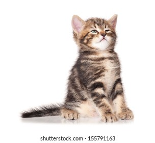 Sleepy funny kitten isolated on a white background