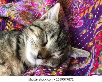 Sleepy grey tabby kitten on purple and pink patterned blanket