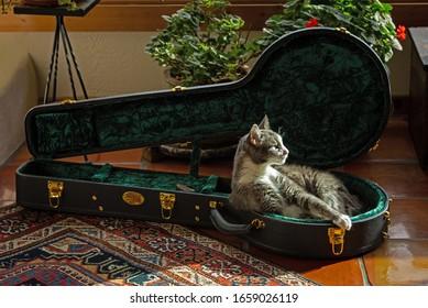 A sleepy house cat decides to re-purpose a banjo case into a soft banjo bed (wide version)