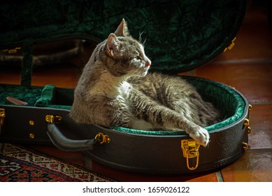 A sleepy house cat decides to re-purpose a banjo case into a soft banjo bed (closse-up version)