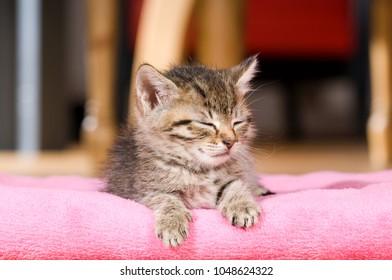 Sleepy kitten on a blanket