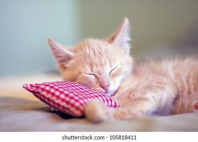 Sleepy Little Kitty