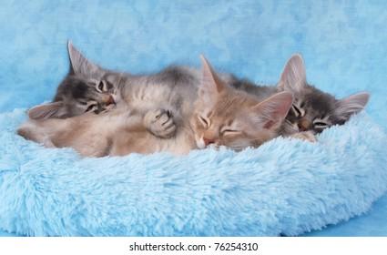sleepy somali siblings in a blue bed