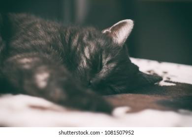 sleepy stripped smoke fat cat on a bed